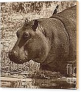 Young Hippo Wood Print