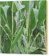 Young Leaves Of Corn Wood Print