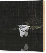 Young Little Blue Heron On The Loxahatchee River Wood Print