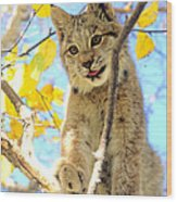 Young Lynx In A Tree Wood Print
