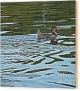 Young Male Garganey Wood Print