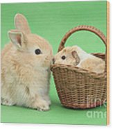 Young Rabbit With Baby Guinea Pig Wood Print
