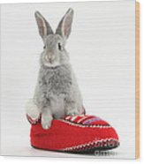 Young Silver Rabbit In A Knitted Slipper Wood Print