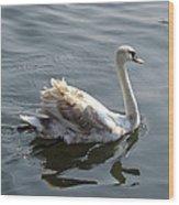 Young Swan Wood Print