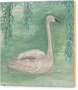 Young Swan Under Willow Tree Wood Print