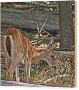 Young Whitetail Wood Print