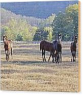 'youngsters In The Paddock' Wood Print by PJQandFriends Photography