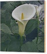 Zantedeshia Aethiopica African Flower Wood Print