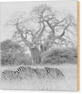 Zebra And Tree Wood Print