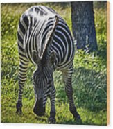 Zebra At Close Range Wood Print by Kelly Rader