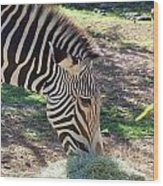 Zebra At Lunch Wood Print