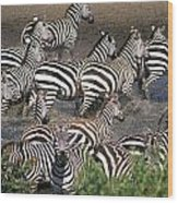 Zebra At Waterhole Wood Print