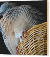 Zebra Dove From Above Wood Print