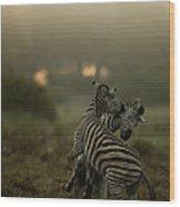 Zebra Equus Burchelli Wood Print