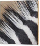 Zebra Equus Quagga Mane, Khama Rhino Wood Print