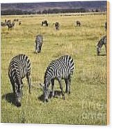 Zebra Grub Wood Print