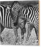 Zebra Hug 2 Wood Print