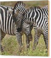 Zebra Hug Wood Print