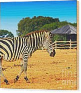Zebra In The Grassland  Wood Print