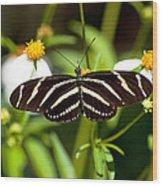 Zebra Longwing And Flowers Wood Print