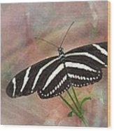 Zebra Longwing Butterfly-3 Wood Print