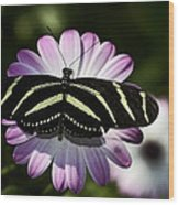 Zebra Longwings Wood Print
