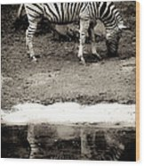 Zebra Reflection  Wood Print