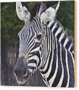 Zebra Symmetry  Wood Print