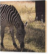 Zebra Take One Wood Print