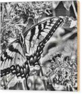 Zebra Wings Wood Print