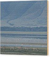 Zebras And Pink Flamingos, Ngorongoro Wood Print