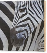 Zebras Close Up Wood Print