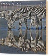 Zebras Drinking Ngorongoro Crater Tanzania Wood Print