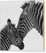 Zebras Mom And Baby Wood Print