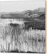 Zen Pond In Ireland Wood Print