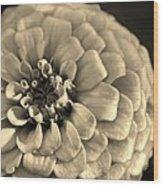 Zinna In Sepia Wood Print