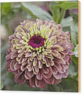 Zinnia Elegans Queen Red Lime Variety Wood Print