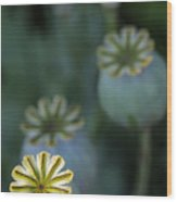 After The Flower 3 Wood Print