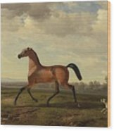 An Arab Thoroughbred At Schloss Blutenburg Wood Print