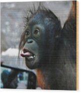 Baby Orangutan Wood Print