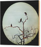 Bald Eagle And Two Juveniles Wood Print