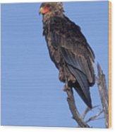 Bataleur Eagle Viewpoint Wood Print