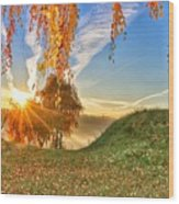 Birches At Sunrise  Wood Print