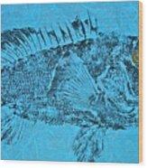 Black Sea Bass - Rockfish - Grouper Wood Print