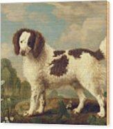 Brown And White Norfolk Or Water Spaniel Wood Print by George Stubbs