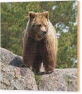 Brown Bear 4 Wood Print