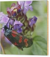 Burnet Moth Wood Print