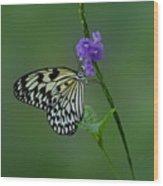Butterfly On Flower  Wood Print by Sandy Keeton