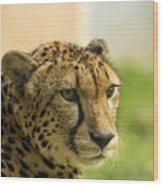 Cheetah Wood Print