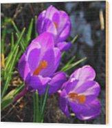 Crocus 0083 Wood Print